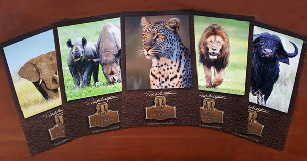display of posters for sale with Africa animals photographer